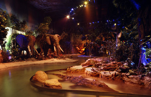 Rainforest Cafe Amp Amusement Park Brandon D Burmeister Design